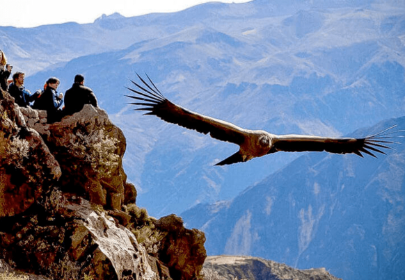 full day colca canyon + flight of the condor