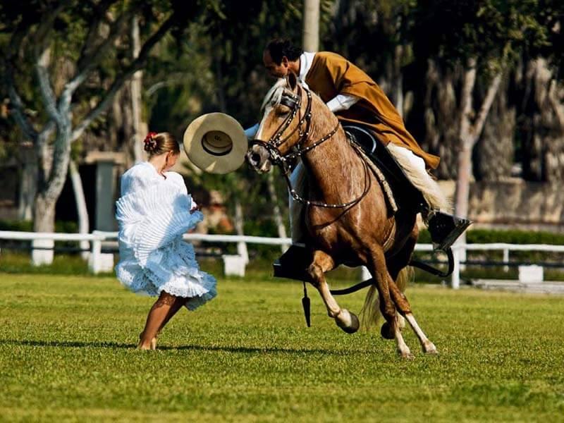 Tour de Pachacamac, restaurante temático, cavalos de paso peruanos.