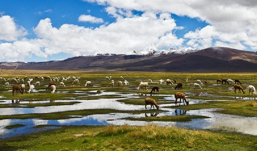 Tour Puno to Cusco by Bus + Peruvian Cuisine